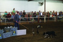 Stock dog demonstration by Danny Shilling of Bois D'Arc, Missouri.